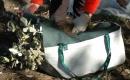 Przygotowanie sadzonek do transportu - na zdjęciu Kontener Leśny typu Węglarka z osłoną zmniejszającą przesuszanie sadzonek - osłona może być wstępnie zwilżona wodą